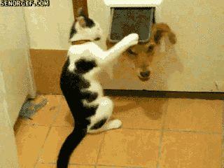 кот бьет пса