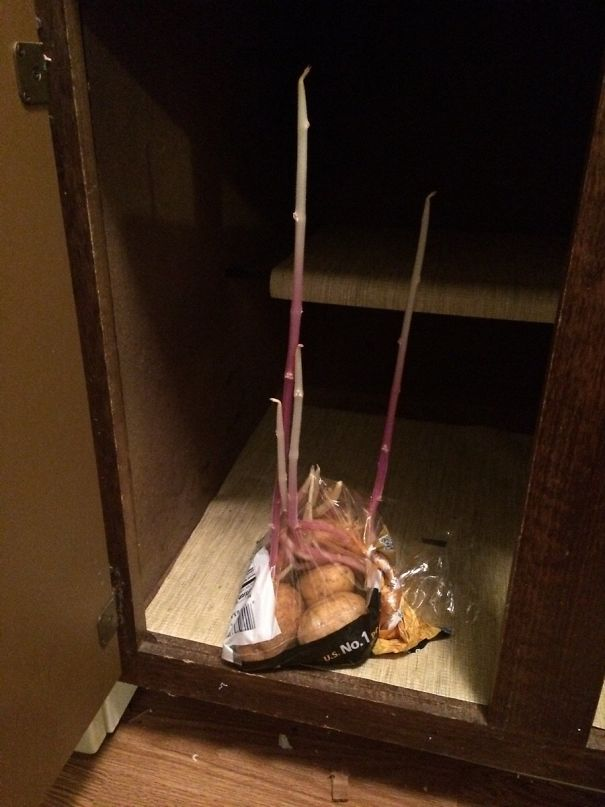 картофель пророс в ящике