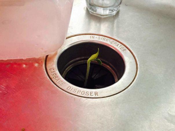 растение выросло в раковине