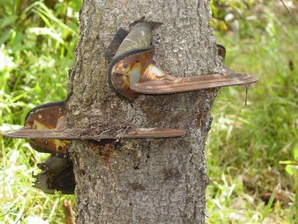 коньки застряли в дереве