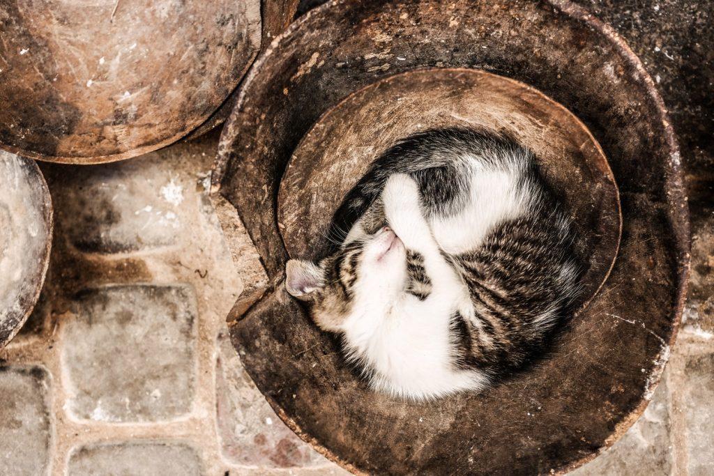 котенок спит фото