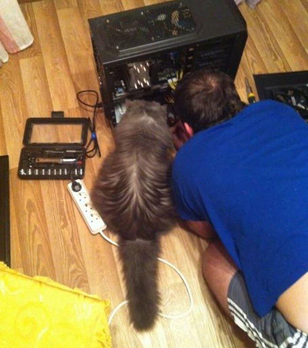 кошка сидит рядом с хозяином на полу