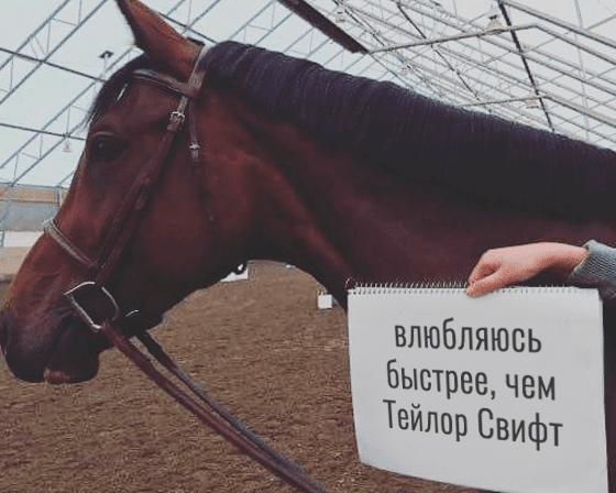 лошадь с табличкой