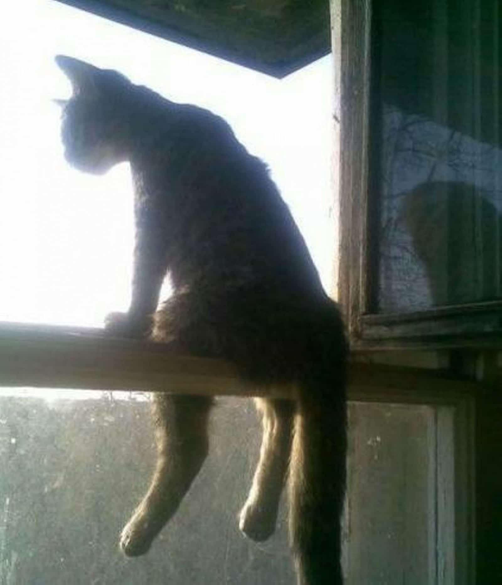 кот сидит на форточке