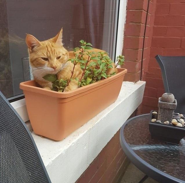 рыжий кот сидит в цветочном горшке