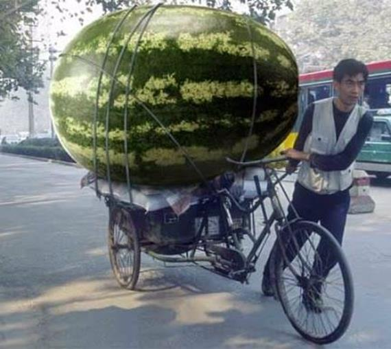 арбуз на велосипеде