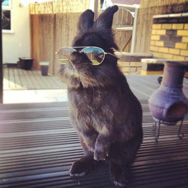 серый кролик в солнцезащитных очках