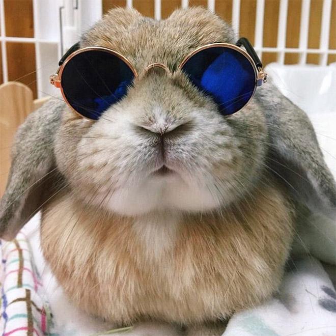 кролик в круглых солнцезащитных очках