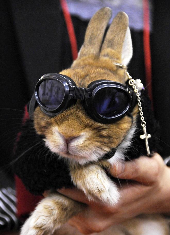 кролик в необычных солнцезащитных очках