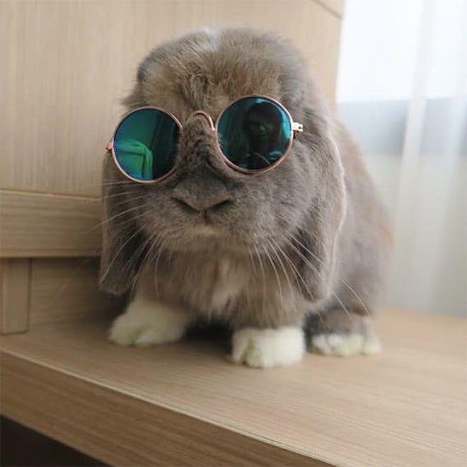 серый кролик в круглых солнцезащитных очках