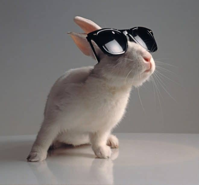 белый кролик в классических солнцезащитных очках