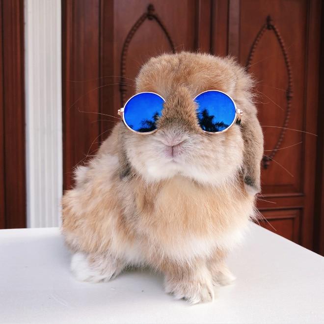 рыжий кролик в солнцезащитных очках