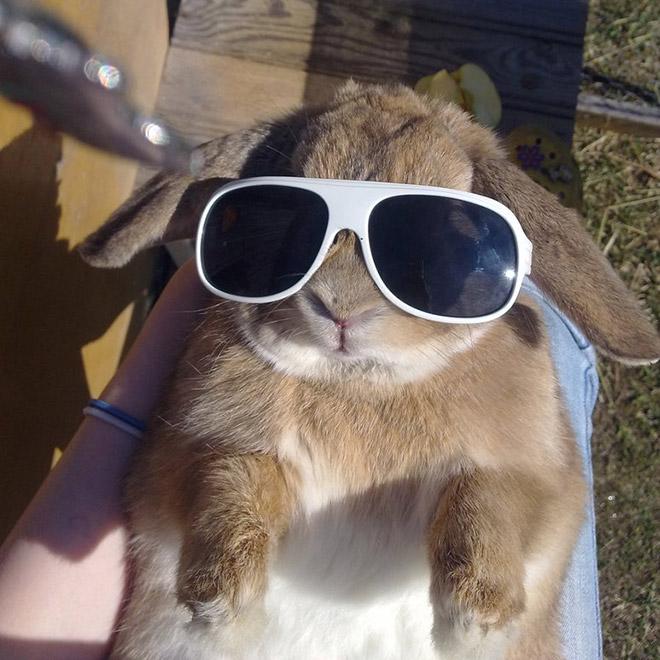 русый кролик в белых солнцезащитных очках