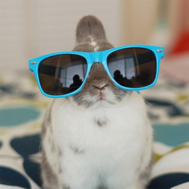 кролик в голубых солнцезащитных очках