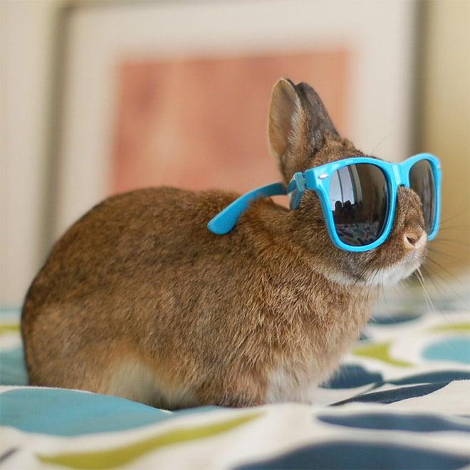 рыжий кролик в голубых солнцезащитных очках