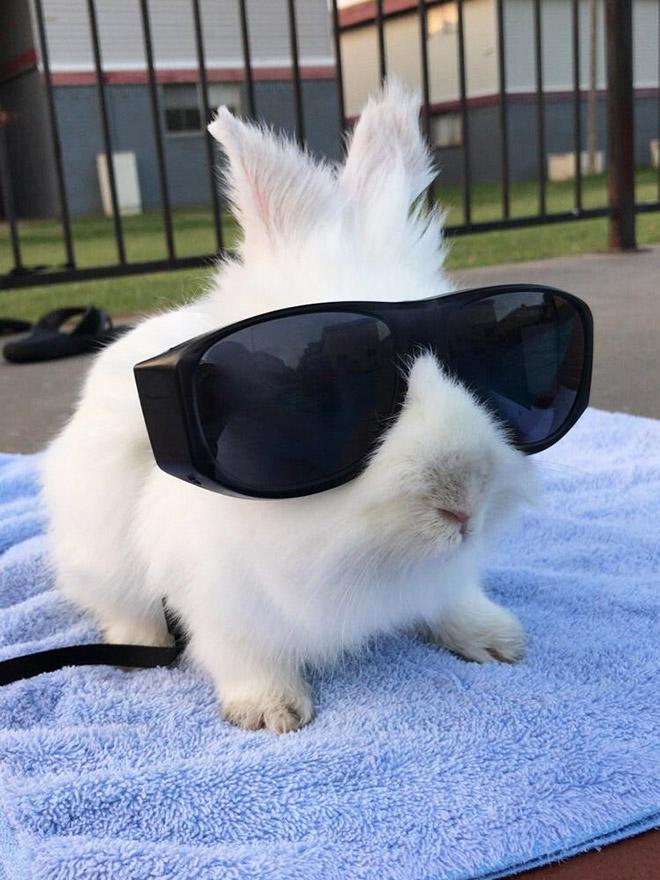 белый кролик в черных солнцезащитных очках