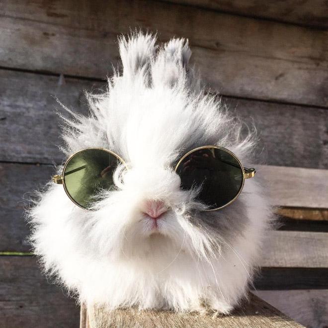 белый кролик в круглых солнцезащитных очках
