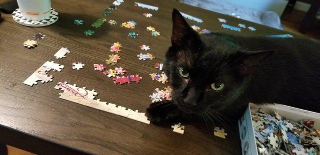 черный кот сидит на столе с пазлами