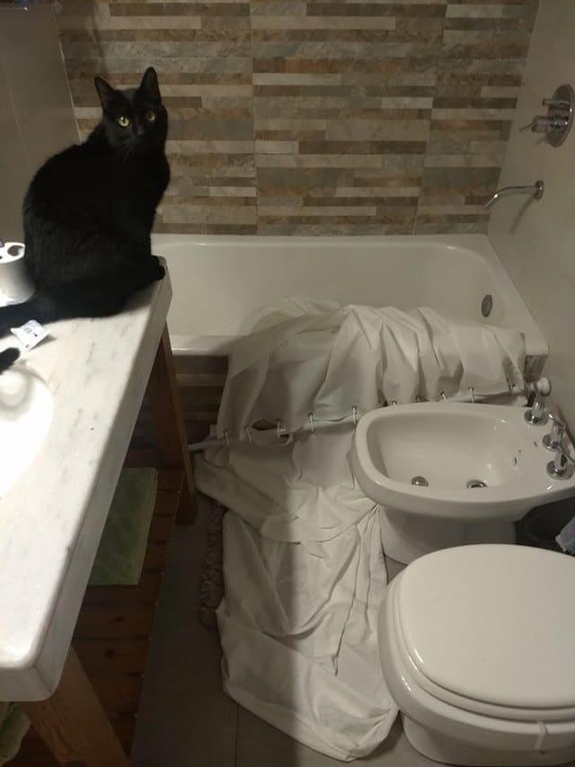 черный кот в ванной