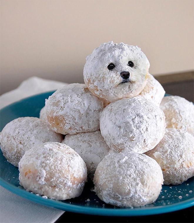 собака и конфеты