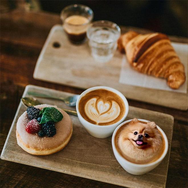 шпиц и кофе