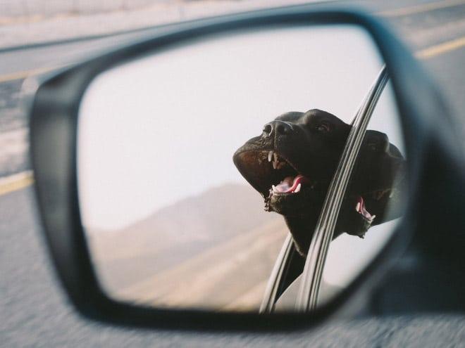 отражение собаки в зеркале авто