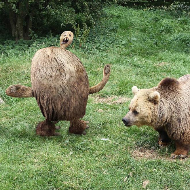медведь фотошоп