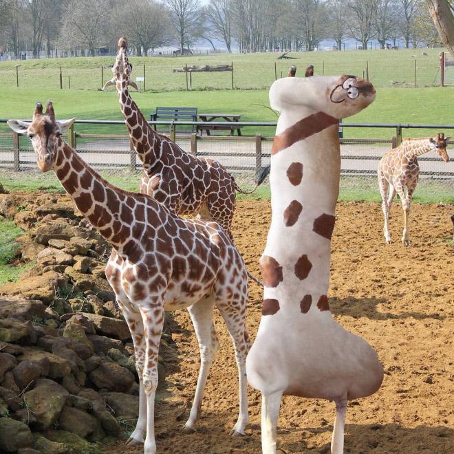 жираф фотошоп