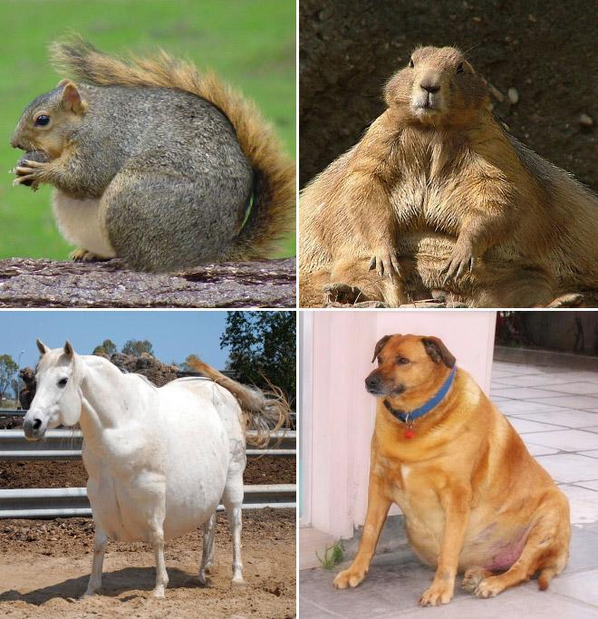 Толстые животные коллаж