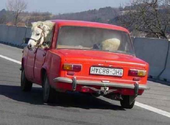 лошадь в машине
