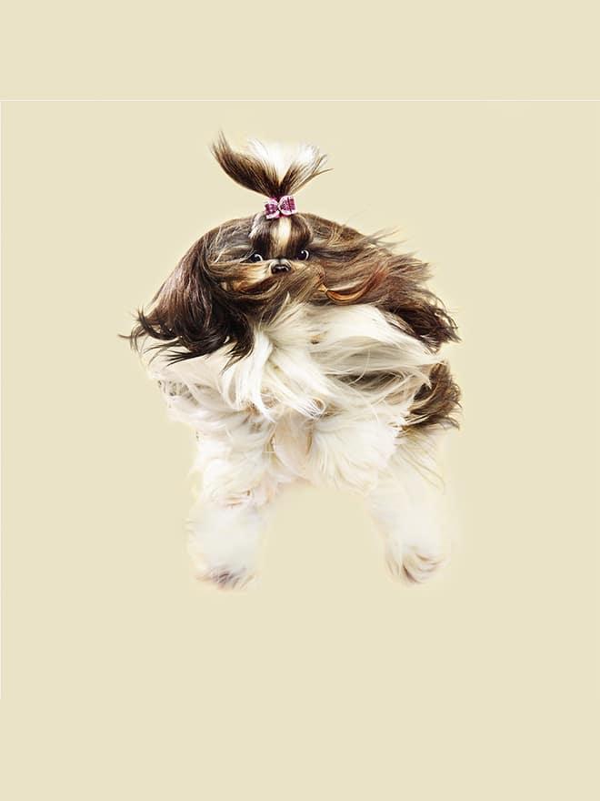 собака-девочка в полете