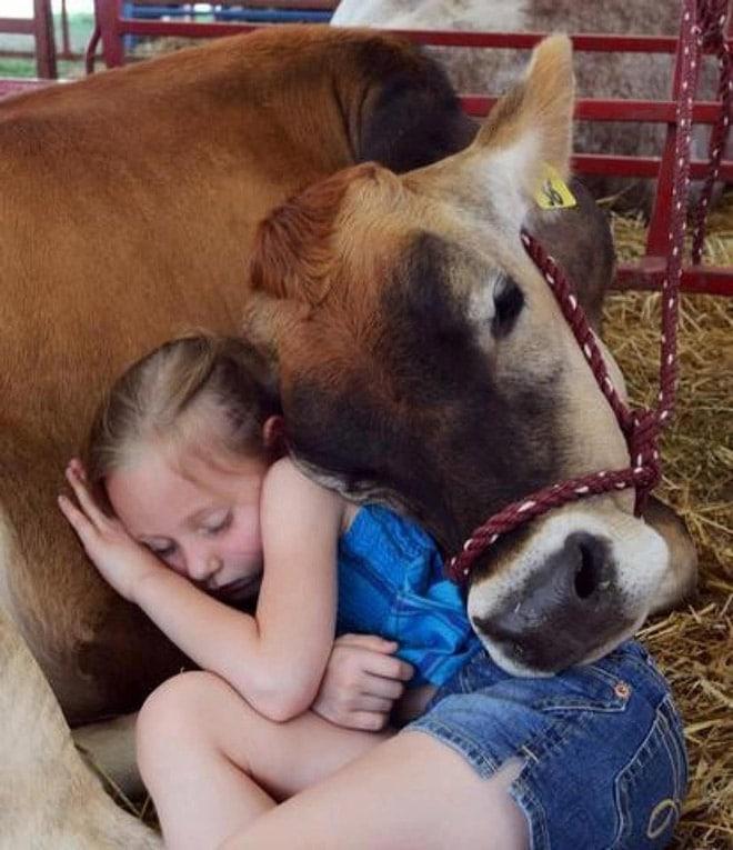 девочка спит на корове