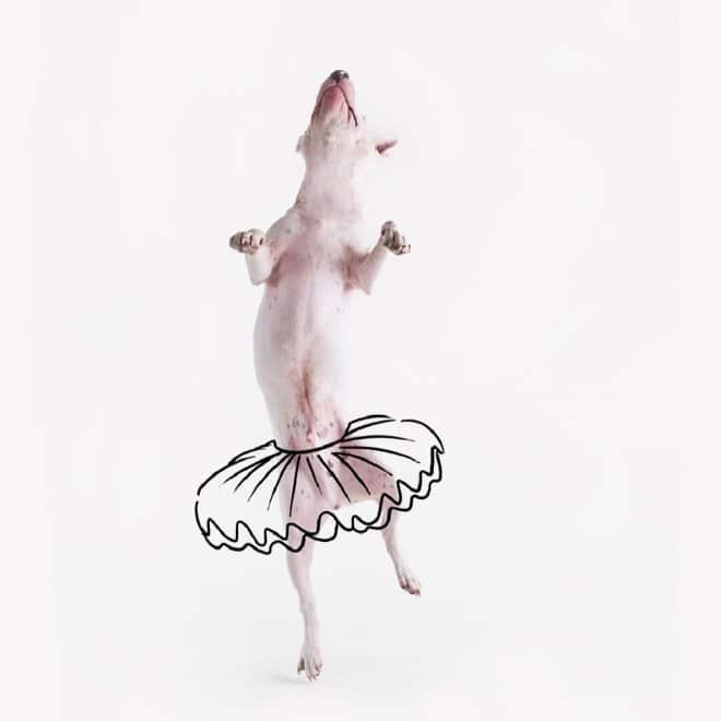 собака в образе балерины