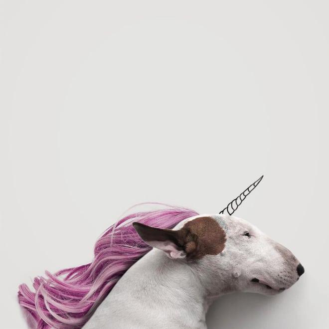 собака в образе единорога