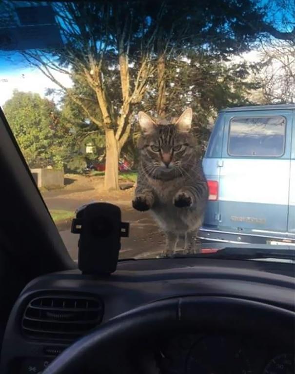 кот сидит на лобовом стекле
