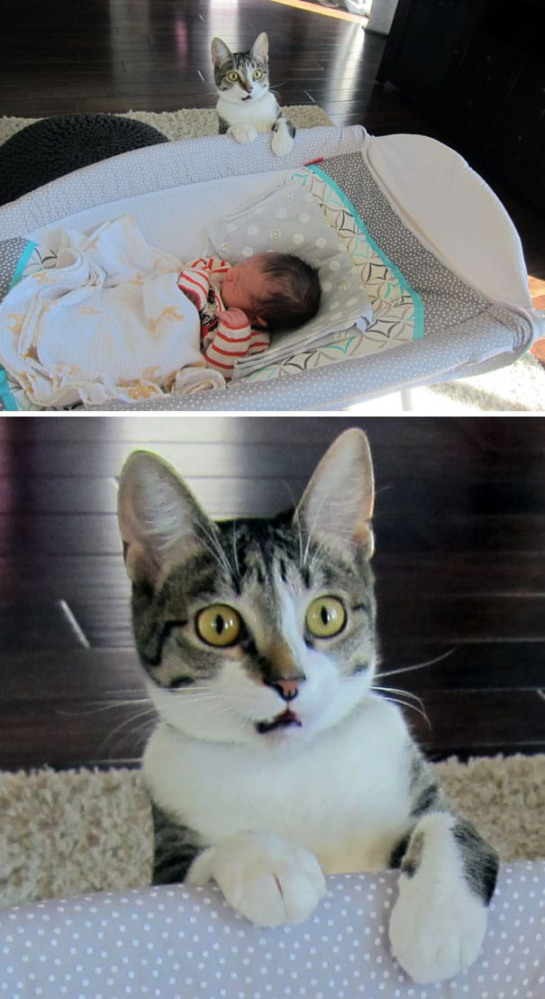кот увидел младенца