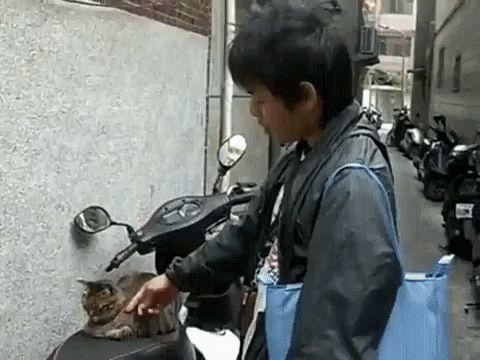 парень будит кота на мопеде