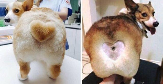 стрижки животных: пес с сердечком