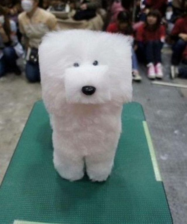 стрижка собаки в форме куба