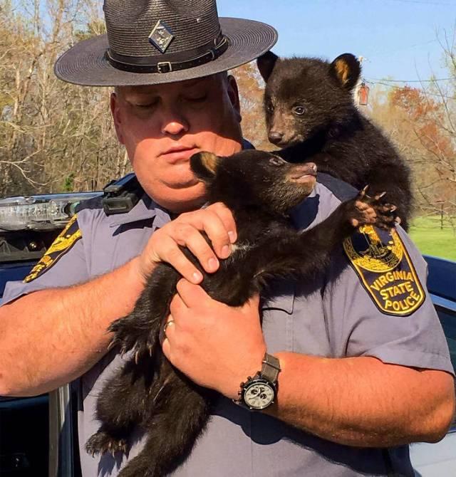 медвежата на руках у полицейского
