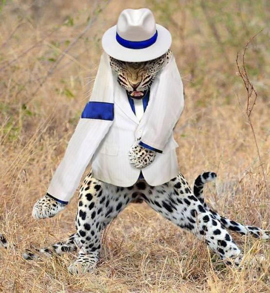 леопард в белом костюме