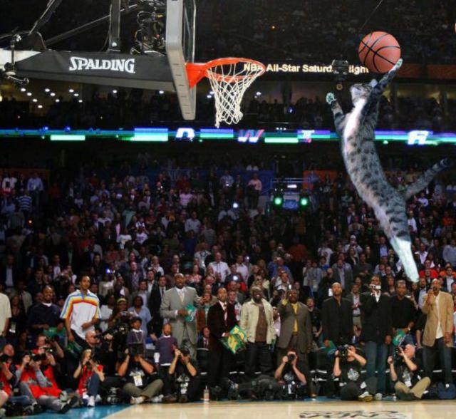 кот играет в баскетбол