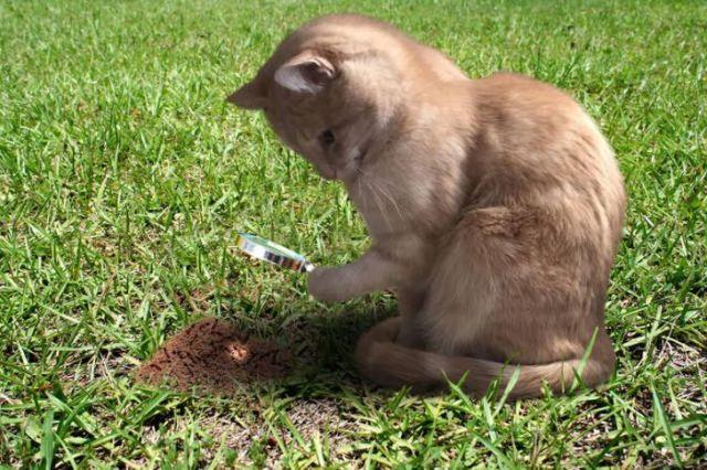 рыжий кот с лупой в лапе