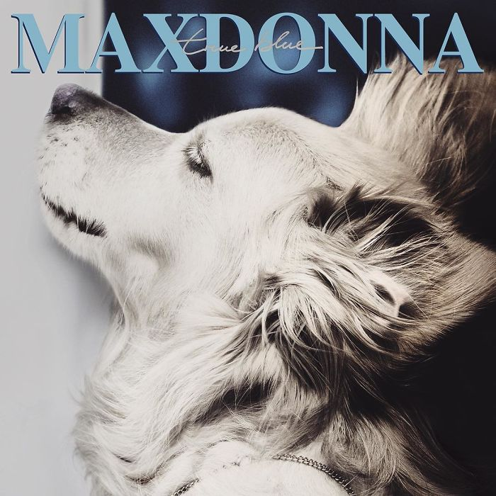 Мадонна фото собака