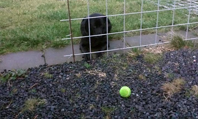 пес и мяч