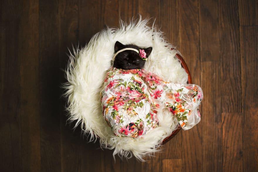 кошка спит фото