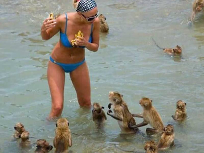 девушка и обезьяны