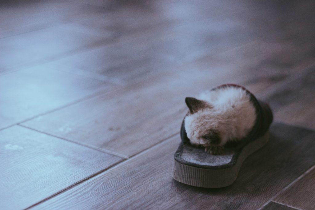 фото котенка