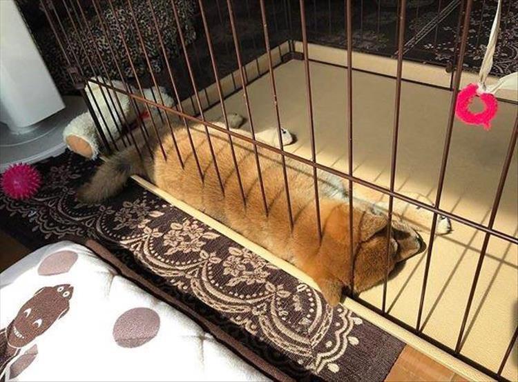 щенок в клетке
