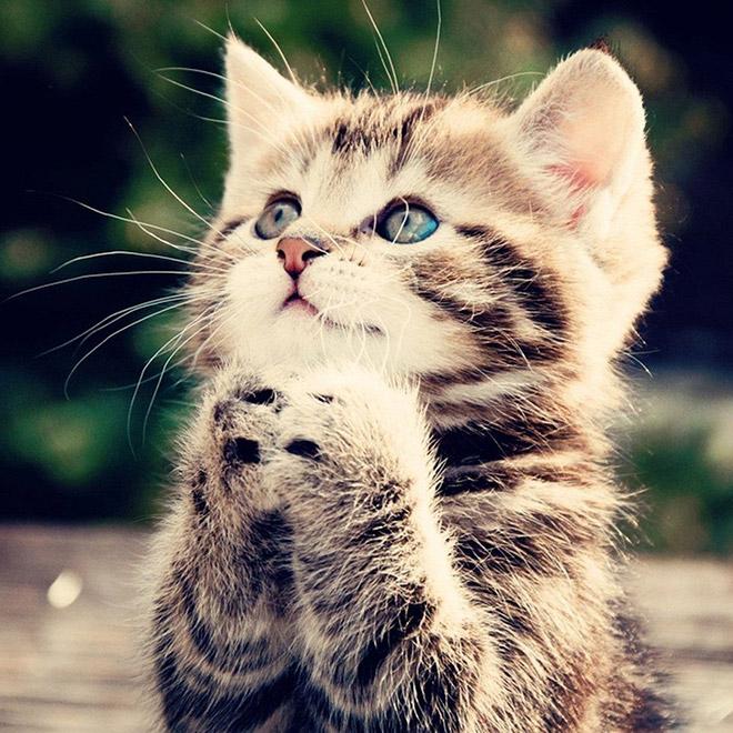 милый котенок смотрит вверх